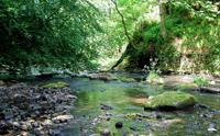 River Esk at Roslin Glen, taken by Magaroonie on Flickr. http://www.flickr.com/photos/magaroonie/4713683025/in/pool-1648094@N24/